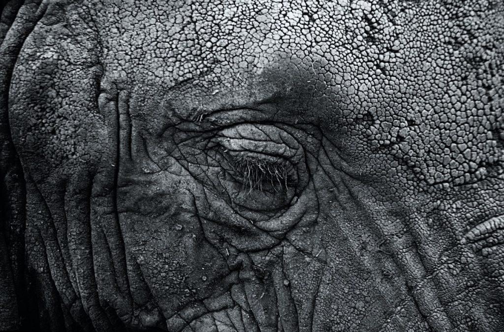 Elefant als Symbol für Falten und Erfahungen –Foto: Michael Davis / Unsplash
